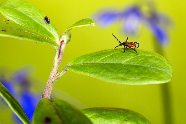 FAQ How To Get Rid Of Ticks In The Garden